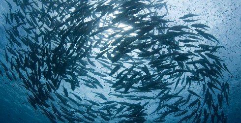 Goedkeuring Europees Parlement aan Europees fonds voor Maritieme Zaken en Visserij 2014-2020